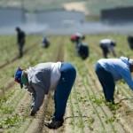 Odluka o najnižem dnevnom iznosu plaće sezonskog radnika u poljoprivredi za 2014. godinu