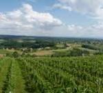 Objavljen Javni natječaj za podnošenje prijava za dodjelu sredstava u mjeri Restrukturiranje i konverzija vinograda u 2014. godini.