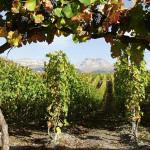 Pravilnik o Nacionalnoj listi priznatih kultivara vinove loze